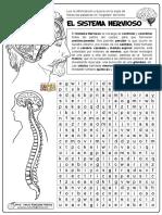01-El-Sistema-Nervioso.pdf