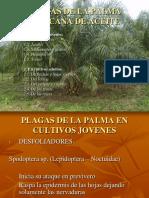 plagas de la palma africana de aceite