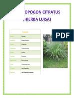 Hierva Luisa (Cymbopogon citratus)