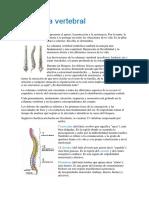 Columna vertebral. Partes.docx
