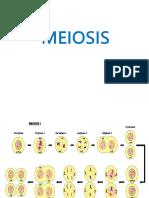 meiosis I y II