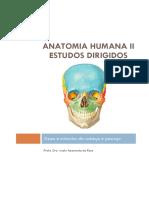 Anatomia Humana II Estudos Dirigidos