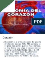 Anatomia de Corazon