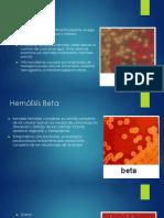 Alfa Beta Gama Hemolitico
