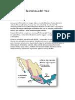 Taxonomía Del Maíz