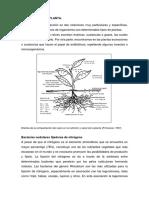 Relacion Suelo Planta