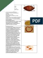Fasciola hepática