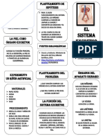 SISTEMA EXCRETOR2.pptx