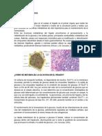 Metabolismo Hepático 1.2