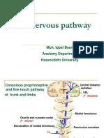 Nervous Pathway