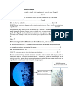 Clave Taxonomica para identificar hongos.docx