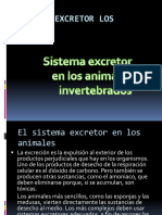 Sistema Excretor Animales