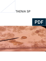 Parasitologia Examen Practico II