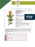Huamanpinta.pdf