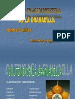 Cultivo en Agroforesteria de La Granadilla