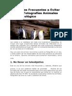 13 Errores Frecuentes a Evitar Cuando Fotografíes Animales en Un Zoológico