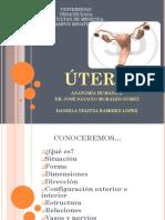 Anatomia Del Utero