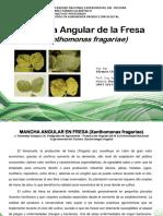Xanthomonasfragariae 150607231731 Lva1 App6891
