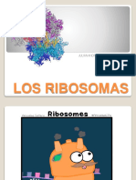 El Ribosoma