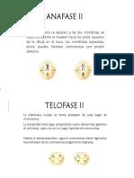 anafase y telofase 2.pptx