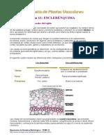 Plantas Vasculares (El esclerenquima)