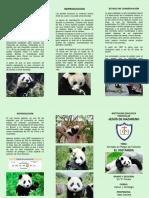 Oso Panda - Trip.