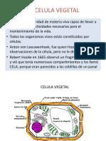 CELULA-VEGETAL.pptx