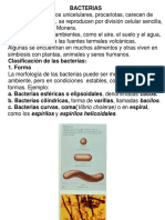 Bacteria-clases.ppt