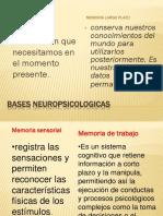 Bases Neuropsicologicas