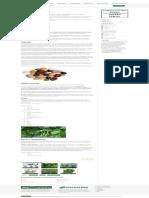 Pasulj _ Seme _ Sorte _ Proizvodnja _ Poljoinfo Wiki