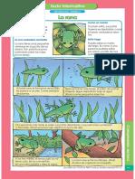 Fichas 3er año.pdf