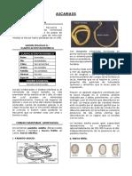 a-lumbricoides.pdf
