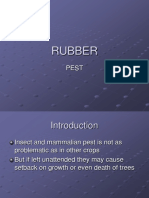 RUBBER Pest n Disease