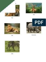 Animales De