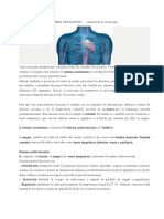 SISTEMA CIRCULATORIO     Características y funciones.doc