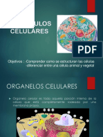 organulos-celulares