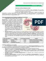 12 - Insulina e Hipoglicemiantes Orais.pdf