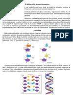 El ADN o Ácido Desoxirribonucleico