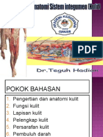 anatomi integumen