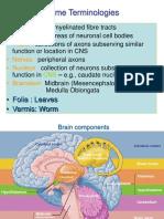 cerebellum, thalamus, and hypothalamus.ppt