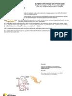 PLAN MUNICIPAL DE DESARROLLO DE CASTAÑOS AYTO 2010-2013
