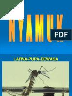 Prak Nyamuk