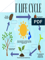 plant life cycle  1
