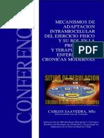 3.-Metabolismo de Lipidos e Hc