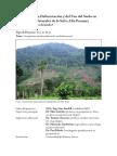 Resumen Tesis Doctoral-selva Alta