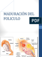 Maduracion Del Ovocito y Morfologia de Gametos