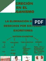 Sistema Excretor Fc