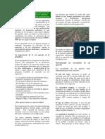 cal+agricola+conceptos+basicos+para+la+produccion+de+cultivos.pdf