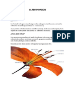 LA FECUNDACION.docx
