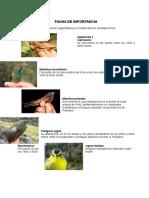 CLASE N° 11 FAUNA DEL  PNH.doc